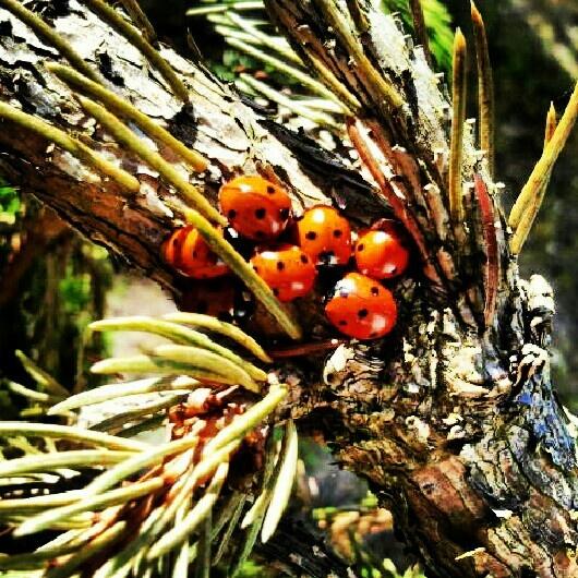 Ladybugs near to seaside