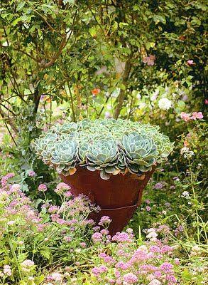 love...succulents!