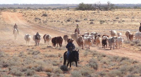 The joint offer by Australia's wealthiest citizen, Gina Rinehart, and a Chinese real estate conglomerate, may soon be bettered by a syndicate of four families that raise and/or transport cattle. | The Land Report