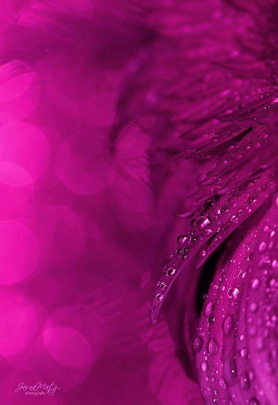 17 Best Images About Inspire Purple Colour Texture On