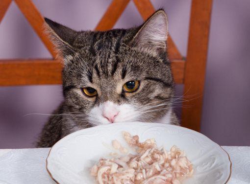 Jaka karma jest dla kota najlepsza?