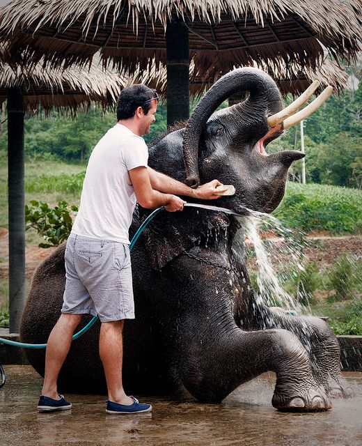 A tourist enjoys washing an elephant at waterfall number two in Koh Samui, an island on the east coast of Thailand.