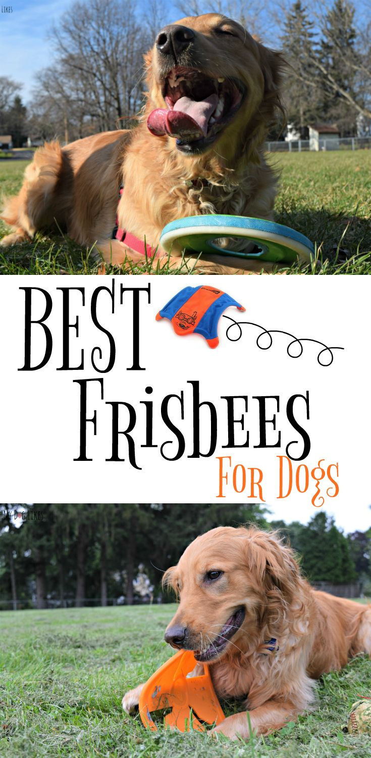 The Best Frisbees For Dogs (according To Charlie)