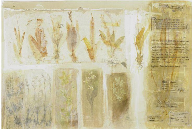 Victoria Crowe- plant memories