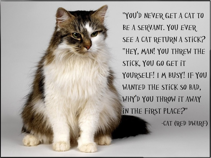 Cat Quote Red Dwarf