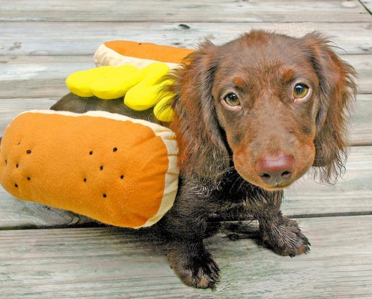 Image result for dachshund halloween costumes
