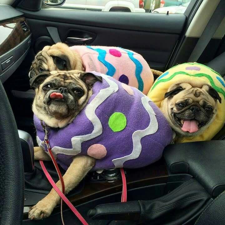 easter egg costume for mini minislice the bugg