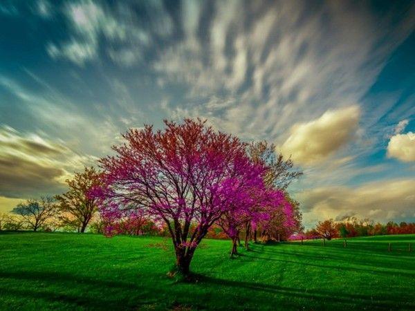 Virágzó fák,Virágzó fák,Virágzó fák,Virágzó fák,Virágzó fák,Virágzó fák,Virágzó fák,Virágzó fák,Virágzó fák,Virágzó fák, - klementinagidro Blogja - Ágai Ágnes versei , Búcsúzás, Buddha idézetek, Bölcs tanácsok , Embernek lenni , Erdély, Fabulák, Különleges házak , Lélekmorzsák I., Virágkoszorúk, Vörösmarty Mihály versei, Zenéről, A Magyar Kultúra Napja-Jan.22, Anthony de Mello, Anyanyelvről-Haza-Szűlőfölről, Arany János művei, Arany-Tóth Katalin, Aranyköpések, Aranyosi Ervin versei, Befőzés…