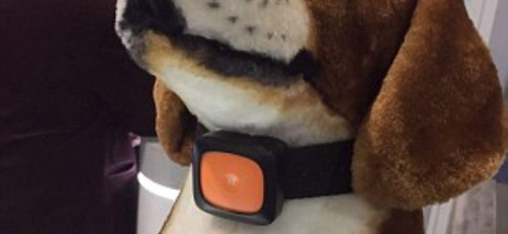 Covesia.com - Jika biasanya hewan peliharaan, terutama anjing hanya menggunakan tali kekang sebagai aksesoris, sepertinya sekarang akan berbeda. Pemiliki...