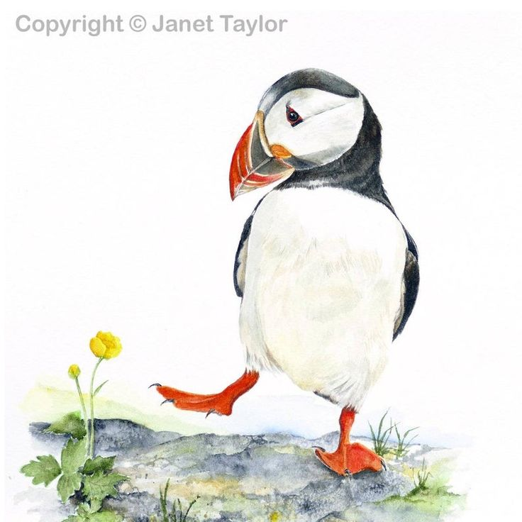 PUFFIN Signed print of a watercolour painting by Jan