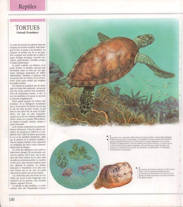 Reptiles (Encyclopédie du monde animal)