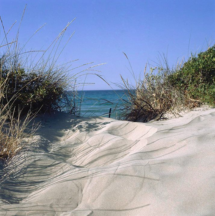 Dune costiere, macchia mediterranea, ed in fondo un mare di un blu profondo. Telo in spalla, andiamo?  http://www.viaggiareinpuglia.it/dir/PE14/35/it/Costa-Brindisina #WeAreinPuglia