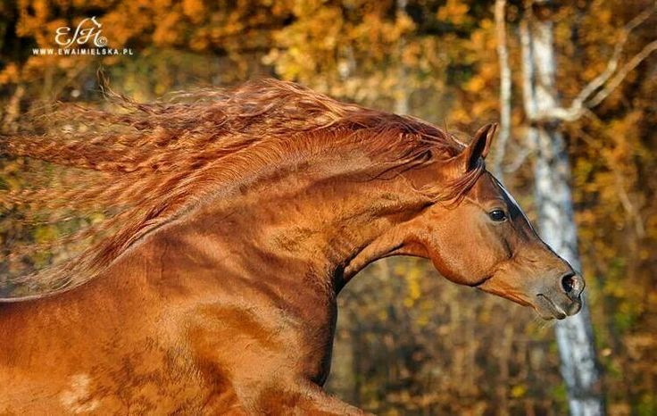 17 Best images about Reds on Pinterest | Horses for sale ...