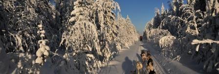 With the dogsled through the snow covered forest during a husky safari of Saija Lodge, Jokijärvi, Taivalkoski, Kuusamo Lapland, Finland