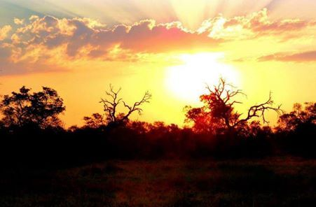 A sunset in the Kruger Park, absolutely spectacular!