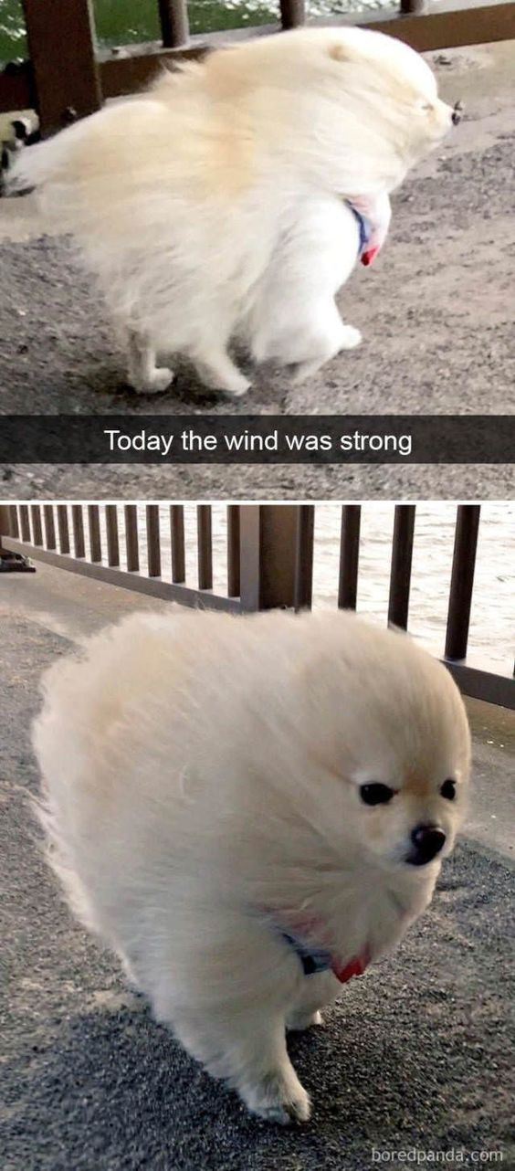 25 Pics Funny Dog Memes To Cheer You Up On A Bad Day Funny Animals
