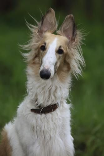 The 10 Dog Breeds That Bark The Least