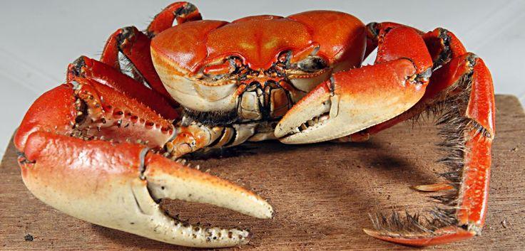 Aula-show gratuita ensina a preparar caranguejo; inscreva-se! | Bom Gourmet