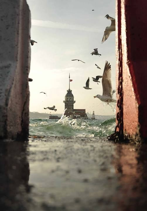 ♡There is something about this photo I just love.  Could be the framing, the birds, the lighthouse, the rough sea or all of the above.  The photo has movement and excitement, I can almost hear the seagulls' cries, taste the tangy salt water, smell the fragrant breeze, and feel the moisture.  It's got it all!