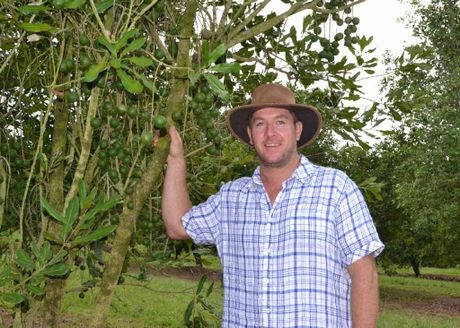 AUSTRALIAN NUT: Macadamia farmer Brad Connelly of McLeans Ridges will be celebrating Australia Day patriotically with the 'old bush nut' on the menu.