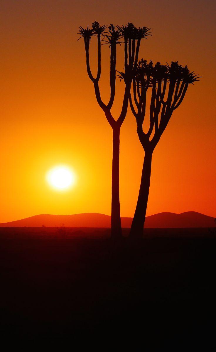 #Sunset #quiver #tree #desert #Namibia #Travel