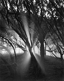 Stunning!: Mists, White Photo, Jablonski Trees, Photos Art Black Whit, Ansel Adam, B W Photography, Photo Art Black Whit, Photography Ideas
