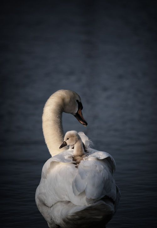 """earth-song:  """"Mother day"""" by Milov Zelt"""