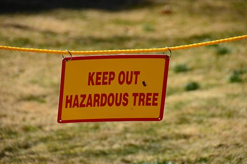 With our Tree Removal service, we will safely and professionally remove any tree, from the largest most hazardous tree to a small tree!  Clean Cut Tree Experts is one of the premier tree service companies in Michigan serving both residential and commercial properties! Call 734-513-7299 Clean Cut Tree Experts is one of the premier tree service companies in Michigan serving both residential and commercial properties! Call (734) 513-7299 or visit www.cleancuttreeexperts.com today!