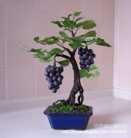 JP: Grapes - 葡萄樹 Apparently Bonsai styling fruit trees is a common thing. So I'm definitely doing it once I figure all this out.