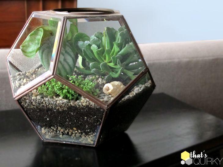 Diy Succulent Terrarium Terrarium Succulents Diy Terrarium Diy