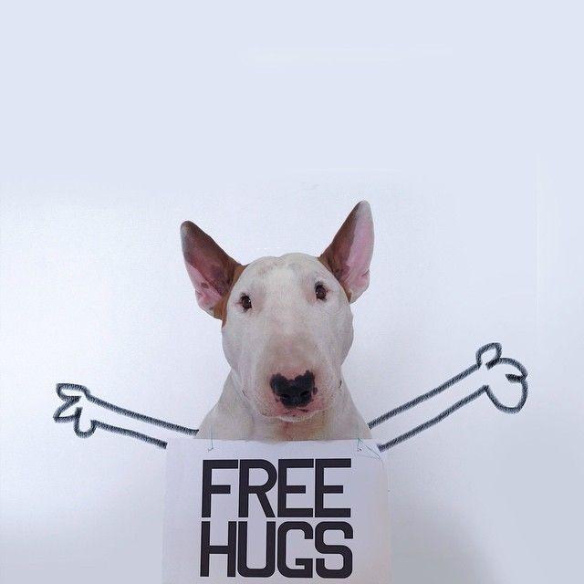 Jimmy Choo, o Bull Terrier do Rafael Mantesso. http://instagram.com/rafaelmantesso
