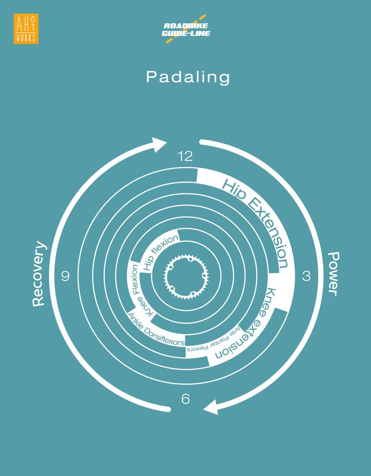 roadbike pedaling Bicycle Infographics Design #pedaling #pedal #bicycle #roadbike #mucle