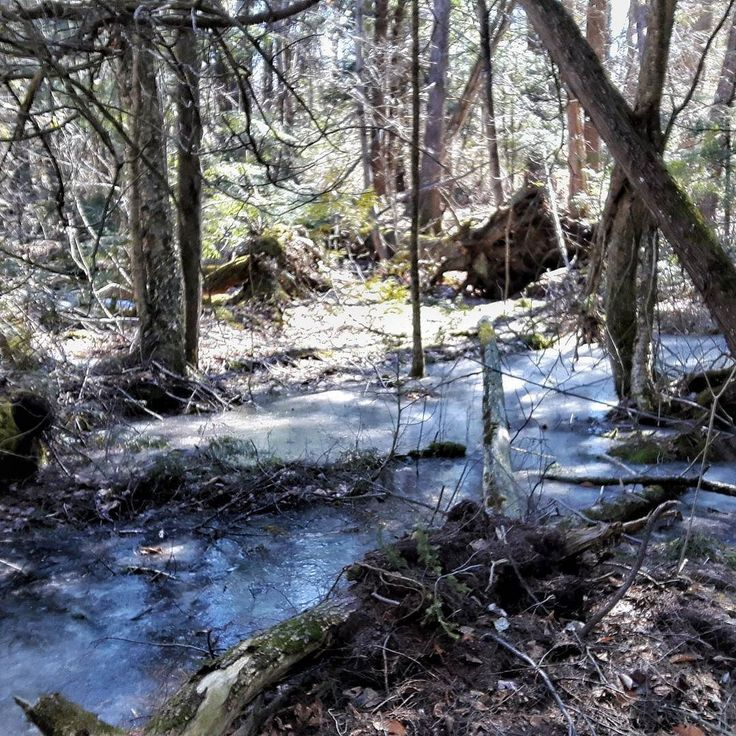 An amazing walk through our woods today with dogs and Leland and Emma.  Between the ice Sculptures fallen trees brilliant sunlight it was all just breathtaking. When you are in need of some soul nourishment come walk our woods. #ontariotravel #kawarthanow #northumberlandculinarytours #northumberland #shorttrips #escapetoronto #thegentlebarn #thestopcfc @lelandnightingale @emmy_rayy