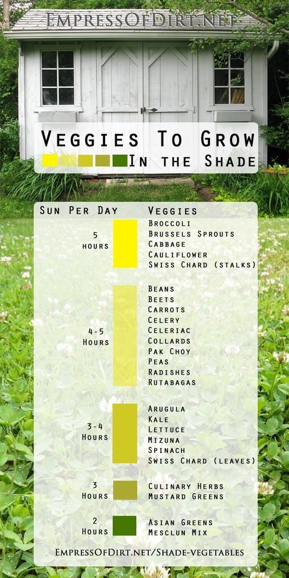 Have a yard that doesn't get a lot of light? Plant veggies that flourish in the shade. | 23 Diagrams That Make Gardening So Much Easier: