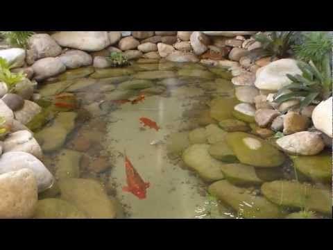 1000 ideias sobre lagos de carpas no pinterest lagoas for Como criar peces koi