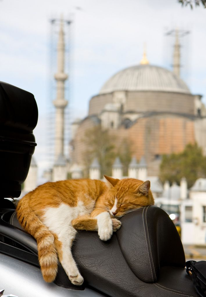 A sleeping #cat framed by one of #Istanbul's many mosques.