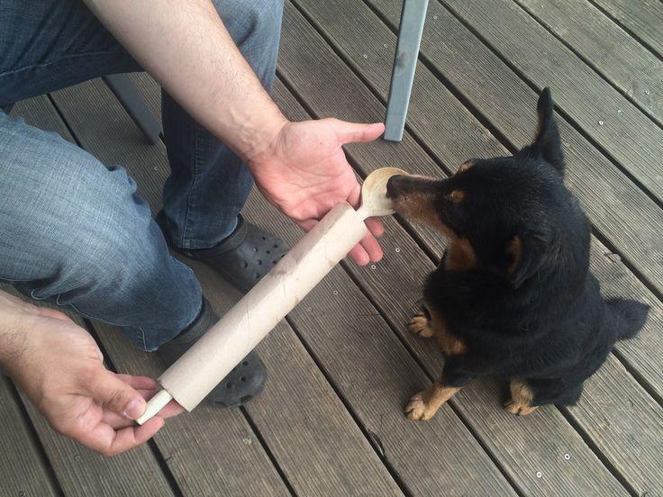 Intelligenzspielzeug hund selber bauen