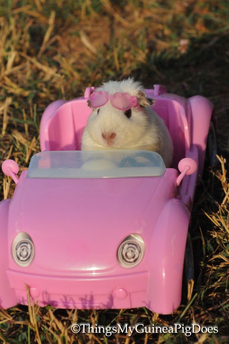 Princess Claire, Mr. Pickles Niece, Learns to Drive. Look out for her on the streets of Asheville, NC!