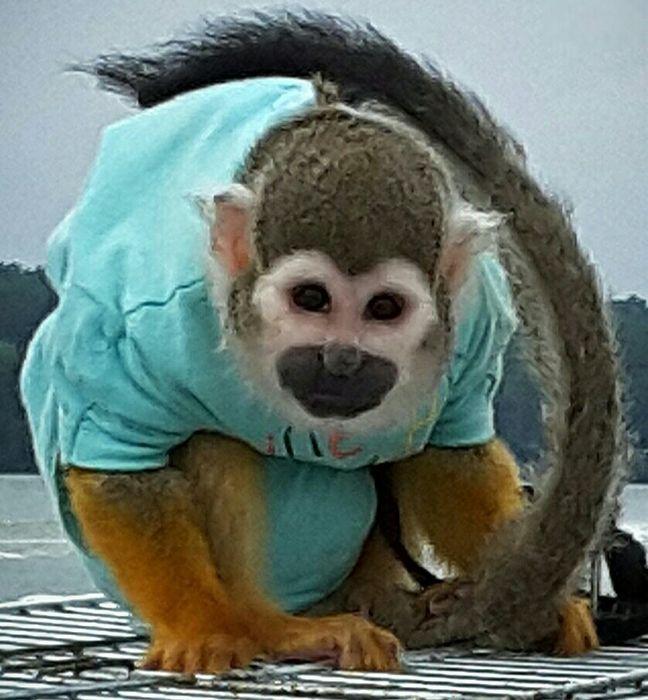 Małpka Fryderyk - logotyp