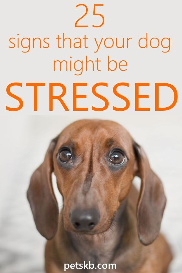 25 Signs That Your Dog Might Be Stressed Dog Crying Dog Stress