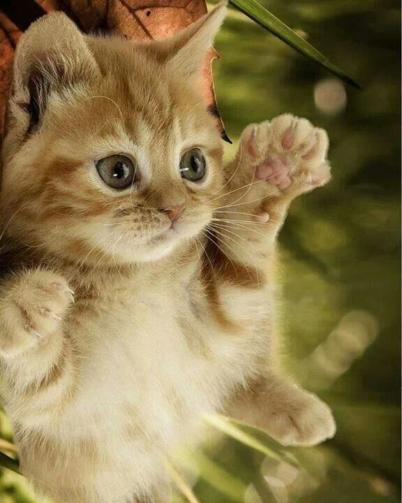 Best 25+ Super cute kittens ideas on Pinterest | Cute baby ...