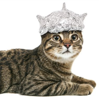 Tin foil hat cat. ## But it still comes up with the Real news either way.##