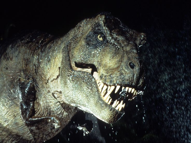 """The T. Rex couldn't actually sprint like it does in 'Jurassic Park' — but it was still a deadly creature - Scientists at the University of Manchester have new proof that T. rex wasn't nearly as terrifying as we thought. The animal's tremendous size and weight prevented it from running at top speeds of 45 mph, like is shown in the blockbuster """"Jurassic Park."""" If T. rex ran at those speeds itsleg bones would have snapped under the force. Sad.  Join the conversation about this story »"""