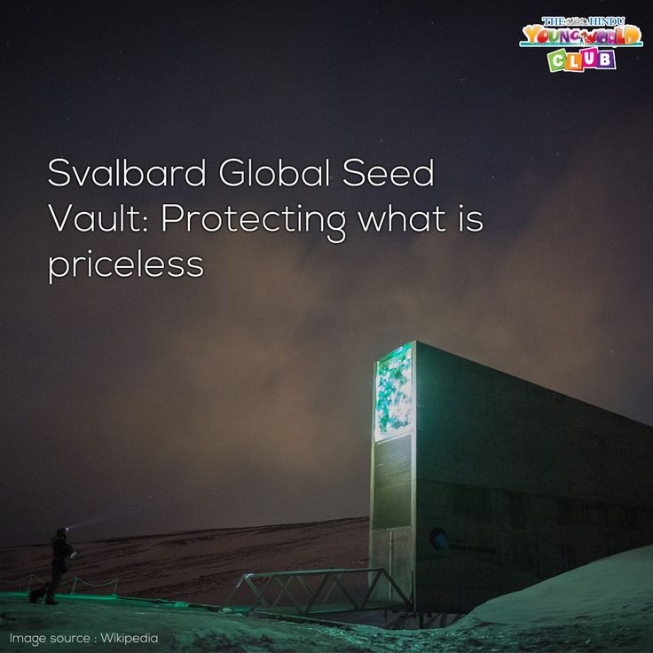 This large vault is meant for safekeeping unusual stuff – native seeds to prevent them from extinction. Read about the Svalbard Global Seed Vault here http://www.youngworldclub.com/articles/global-seed-vault/  #knowledge #informational  #Didyouknow
