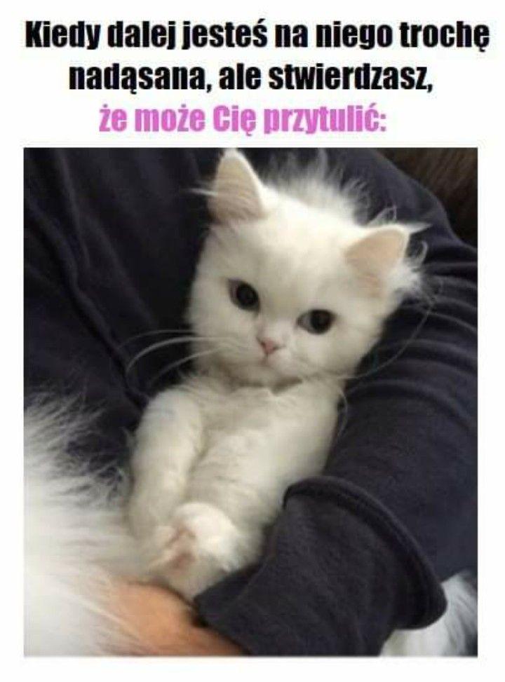 Pin By Kamila Witkowska On Memes Funny Mems Memes Funny