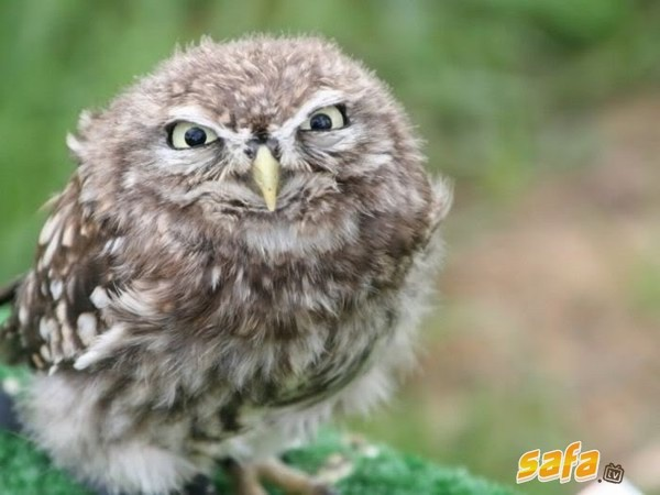You're an angry little owl, arn't you?!