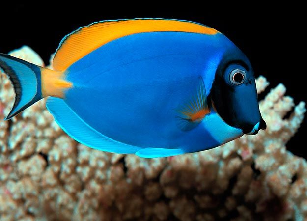 Tanked Fish Pictures : Tanked: Animal Planet