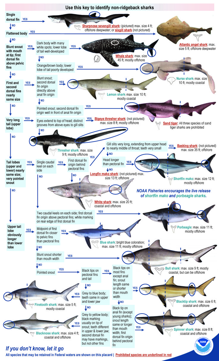80 best gulf of mexico news images on pinterest mexico for Gulf of mexico fish identification