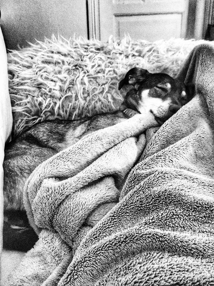 Hundeliebe - wenn der Hund sooooo müde ist. #welpen #mischling #hundeblick #hunde #hundeliene