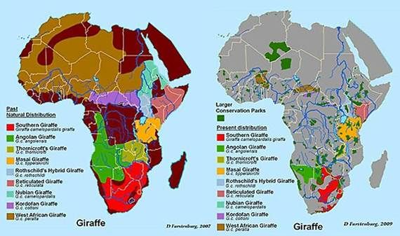 african migration map with 369998925615676005 on All You Need To Know About Namibia additionally Great Migration in addition 369998925615676005 besides Destinations Tanzania Serengeti National Park further Art.